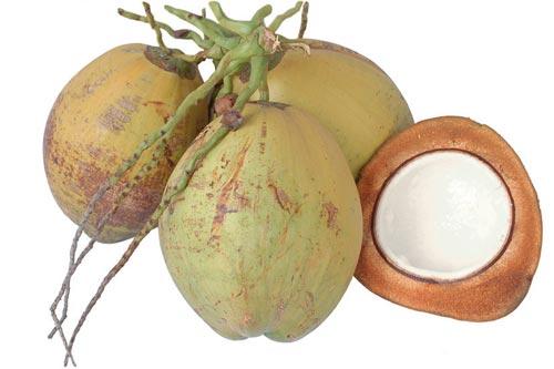 Hasil gambar untuk kelapa