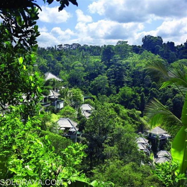Panorama alam dilihat dari ubud hanging garden
