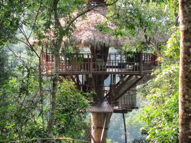 Rumah pohon the gibbon experience