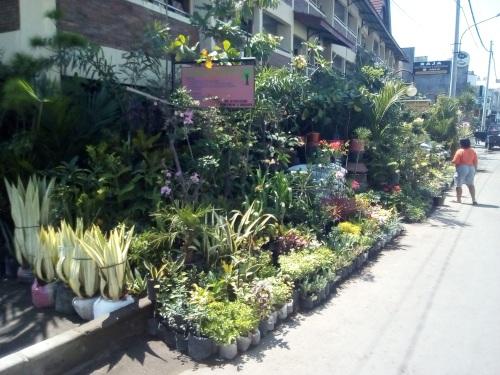 tanaman hias Pasar Legi