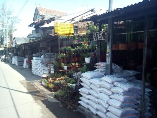 Tanaman hias Pasar Nongko